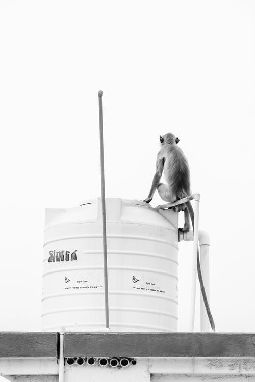 A Monkey on Top of An Overhead Water Tank