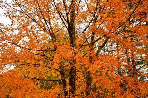 Free stock photo of autumn, autumn colors, autumn leaves, autumn mood