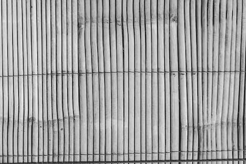 Fotobanka sbezplatnými fotkami na tému abstraktné pozadie, čierna a biela, drevo, les