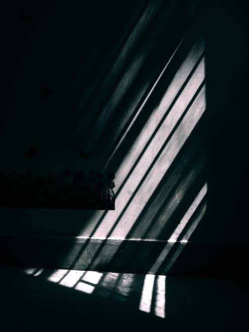 คลังภาพถ่ายฟรี ของ ความคมชัด, มืด, สดใส, สว่าง