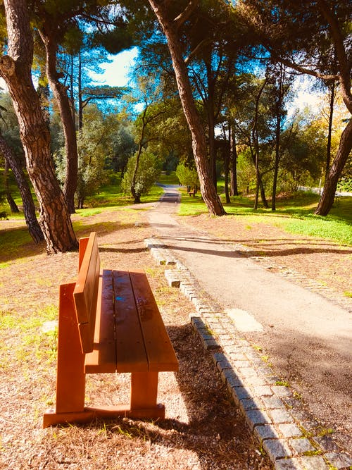 Foto profissional grátis de corrida, declínio, jardim, Lisboa