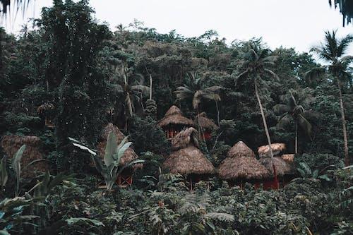 Безкоштовне стокове фото на тему «дерева, дерево будинок, джунглі»
