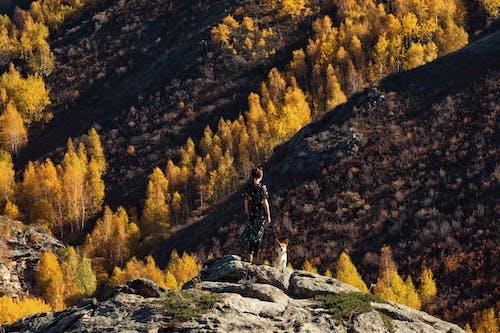 Immagine gratuita di alberi, ambiente, avventura, cane