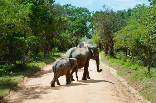 Ingyenes stockfotó állatkert, bokor, elefántok, emlős témában