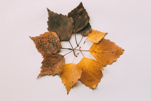 Photo of Brown Leaves