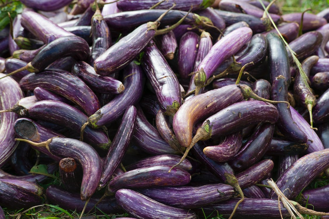 Eggplant Vegetable Plant Lot