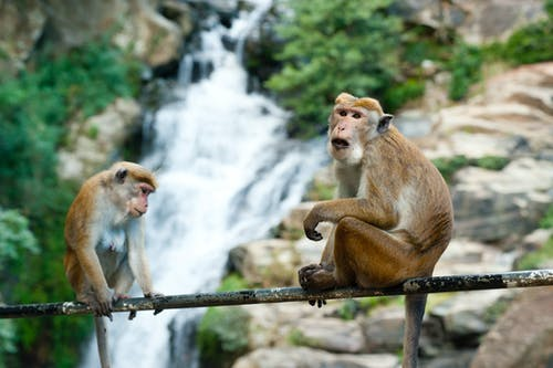 Бесплатное стоковое фото с водопад, дикая природа, дикий, животное