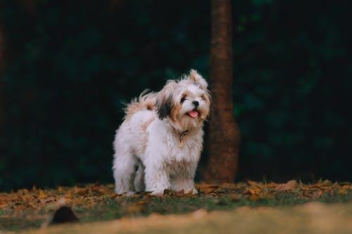 Gratis stockfoto met babyhondje, dierenfotografie, hond, honden