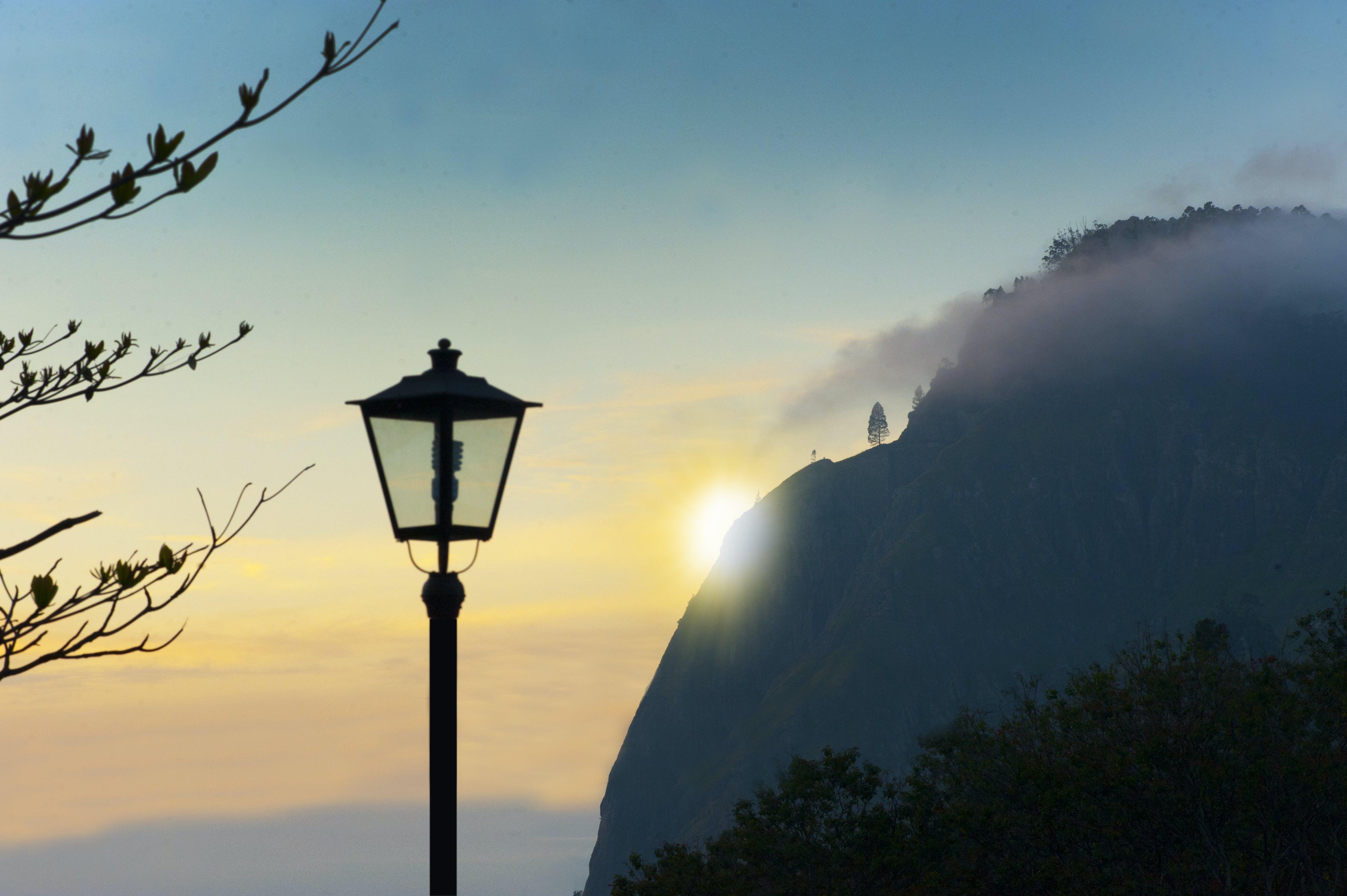 Foto d'estoc gratuïta de alba, arbres, boira, bonic