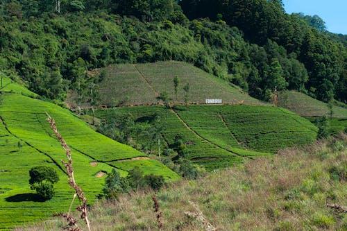 Foto stok gratis bidang, dewasa, gunung, hijau