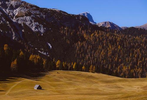 açık hava, ağaçlar, alan, çim içeren Ücretsiz stok fotoğraf