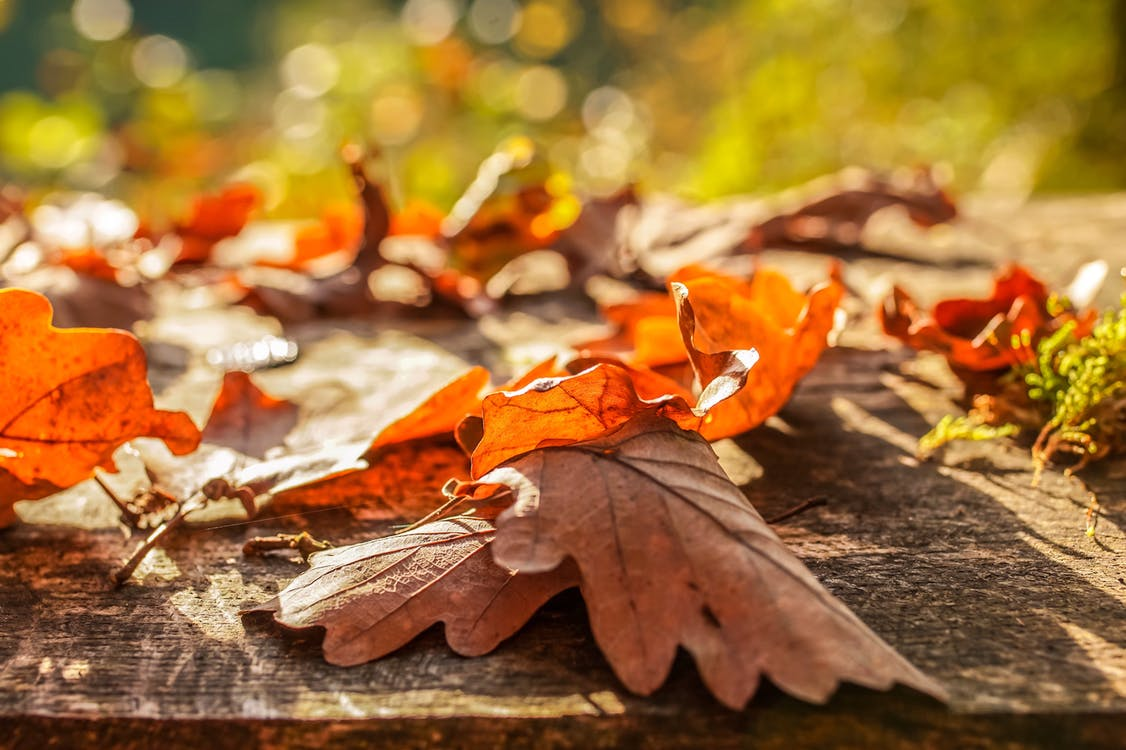 Selective Focus Photo of Dried Leaves