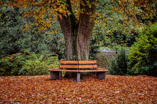 Brown Wooden Bench Under Tree