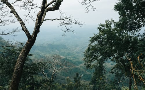 Fotos de stock gratuitas de arboles, árboles altos, bosque de arboles, ladera de la montaña