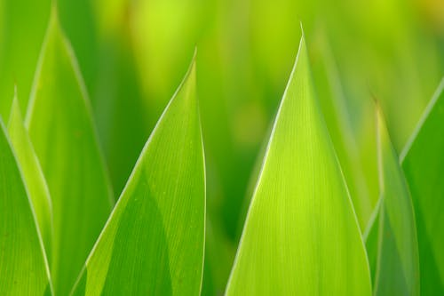 Kostnadsfri bild av bakgrundsbelysning, blad, fjäder, gren