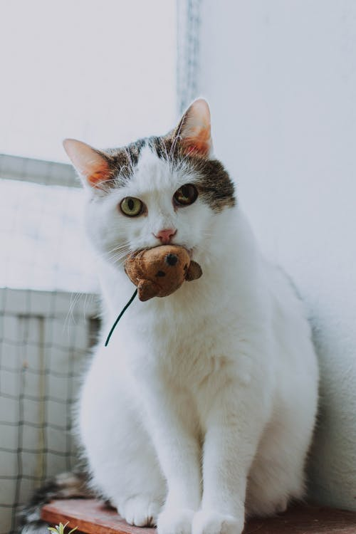 Cat With A Mouse Toy