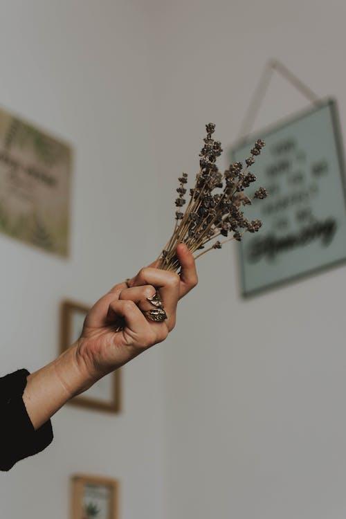Kostenloses Stock Foto zu blumen, flora, hand, lavendel