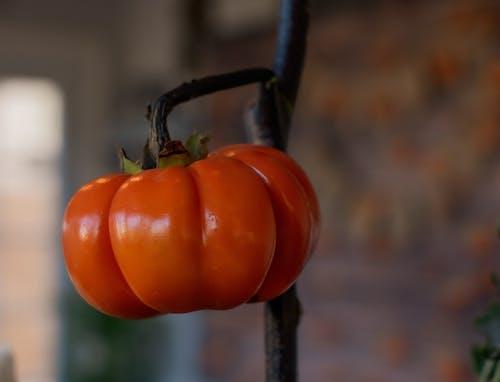 南瓜, 工厂, 蔬菜 的 免费素材照片