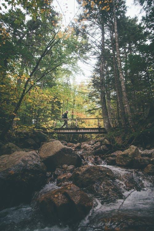 Základová fotografie zdarma na téma chůze, les, most, padání