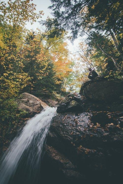 Foto d'estoc gratuïta de a l'aire lliure, aigua, arbres, bosc