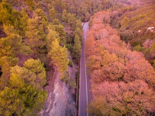 Fotobanka sbezplatnými fotkami na tému dron, farby jesene, jeseň, jesenná farba