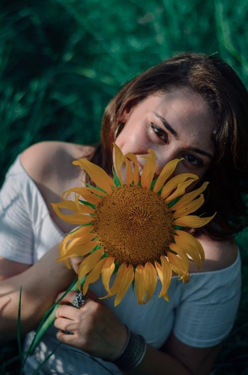 Free stock photo of creative photography, sunflower