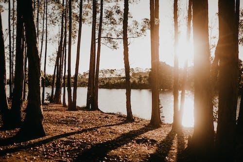 Bäume In Der Nähe Des Sees