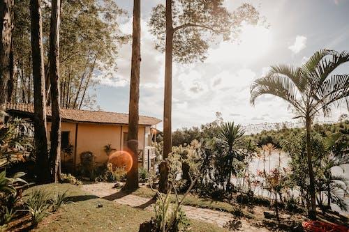 Fotos de stock gratuitas de al aire libre, amanecer, arboles, arquitectura