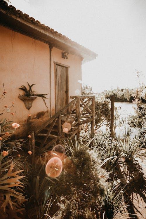 Fotos de stock gratuitas de afuera, al aire libre, bokeh, durante el día