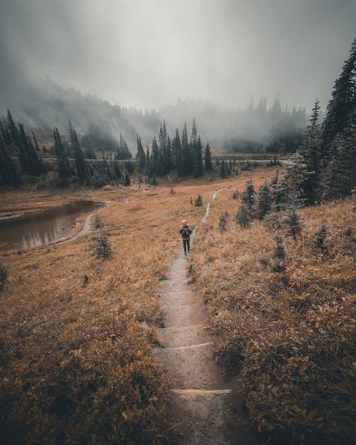 Ingyenes stockfotó erdő, esés, fák, festői témában