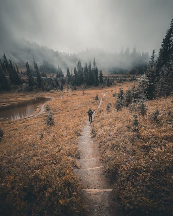 Person Walking on Dirt Road Between Trees