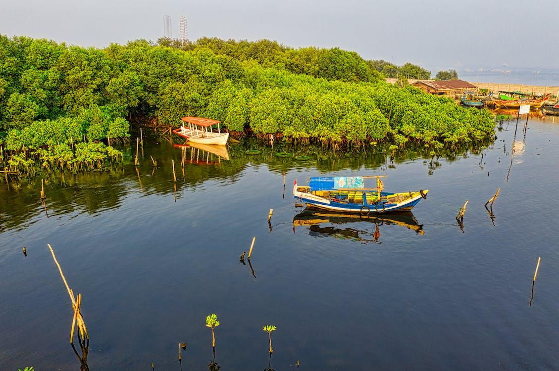 ao ar livre, árvores, barco de pesca