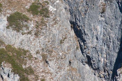 Free stock photo of mountain climber