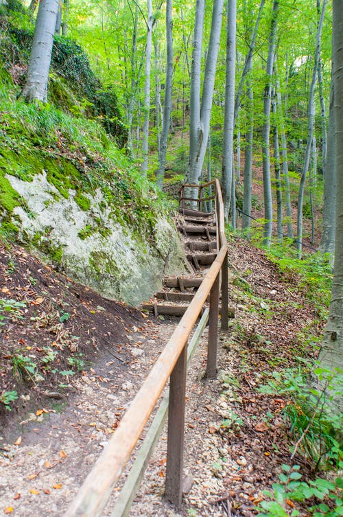 Free stock photo of woods stairs