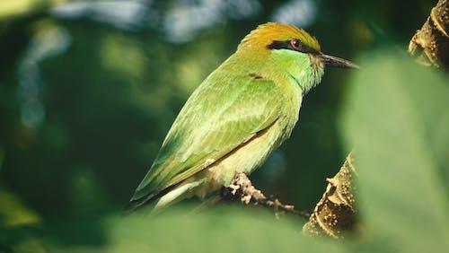 一只鸟, 栖息, 猛禽, 绿色甜椒 的 免费素材照片