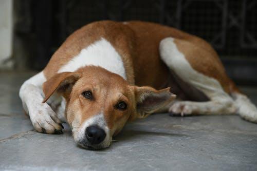 Darmowe zdjęcie z galerii z pies, pies uliczny, szczery