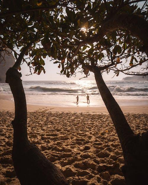 Free stock photo of beach, couple, sea