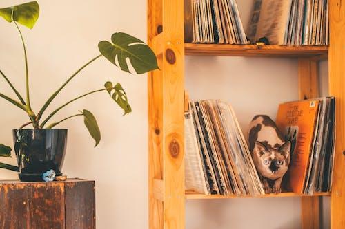 Základová fotografie zdarma na téma design interiéru, dřevěné police, dřevěný, dřevo