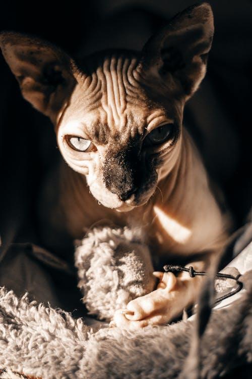 Gato Marrón En Cueva De Mascotas