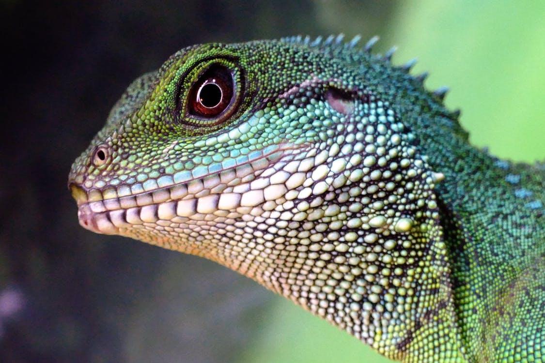 Green and Beige Lizard