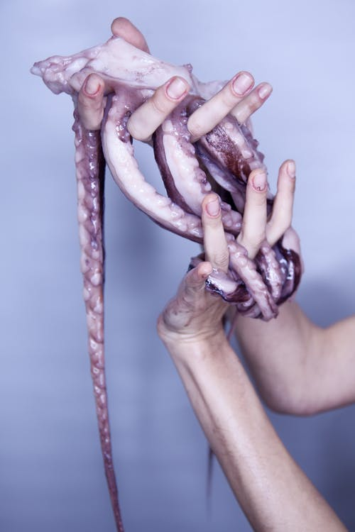 Photo of Person's Hands Holding Tentacles