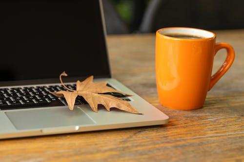 Foto stok gratis cangkir, daun, daun jatuh, daun maple