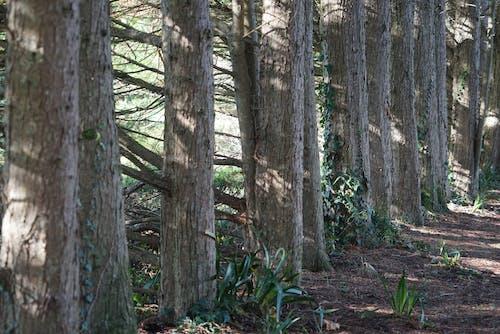 Darmowe zdjęcie z galerii z arbres, bois, foret, natura