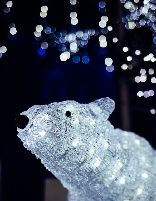 Free stock photo of bokeh, lights, polar bear, winter