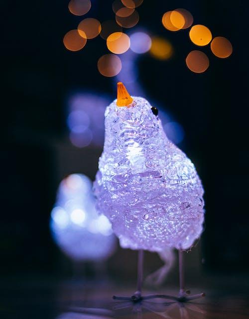 Free stock photo of bird, bokeh, christmas holidays, lights