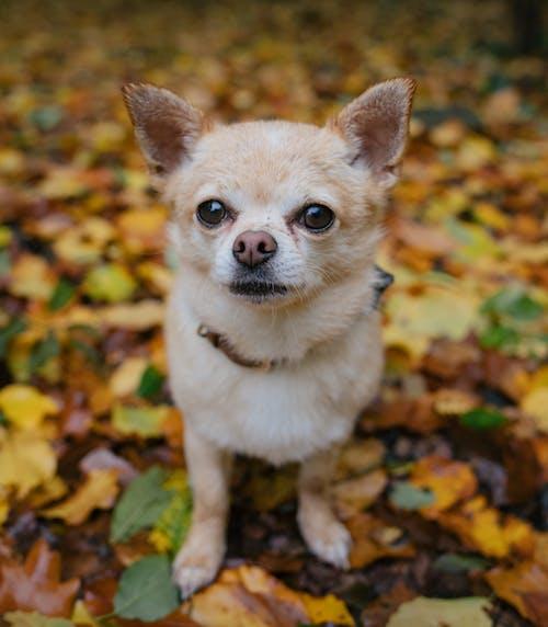 Free stock photo of autumn, cute, cute animal, dog