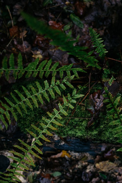 Free stock photo of green, leaves, nature