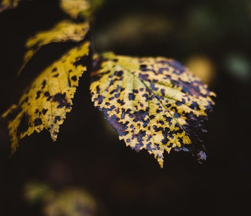 Free stock photo of autmunal, leaves