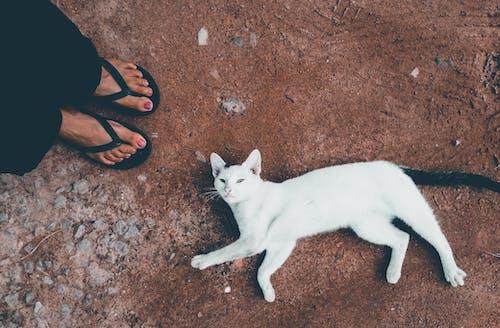 aksiyon, bacak portresi, benim her gün, Beyaz kedi içeren Ücretsiz stok fotoğraf