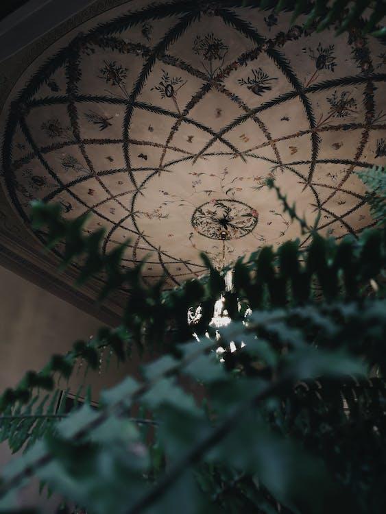 architectuur, botanisch, donkergroen